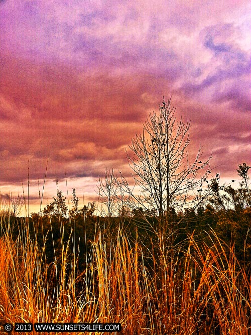 Tree's, Weeds, & Clouds Photo Art
