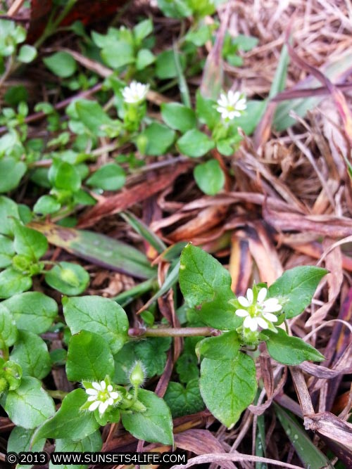 Little White Flowers In My Back Yard