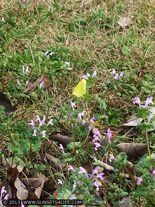 Butterfly 01-13-13-SUN