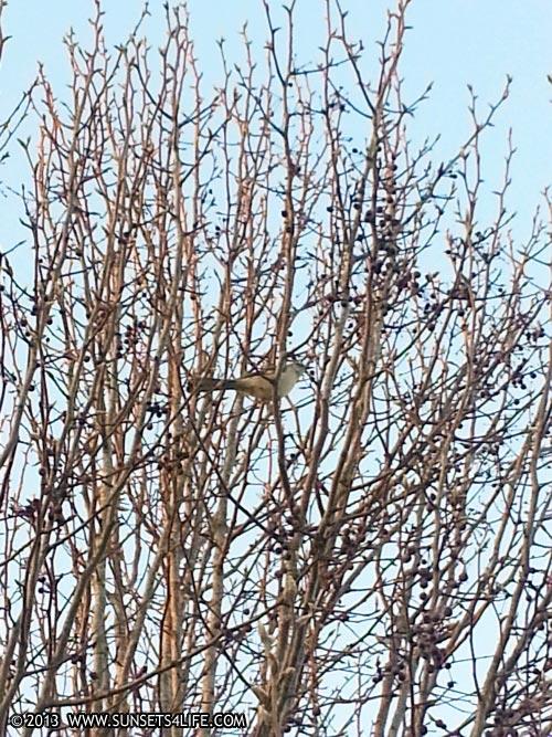 Little Bird 01-20-13-SUN